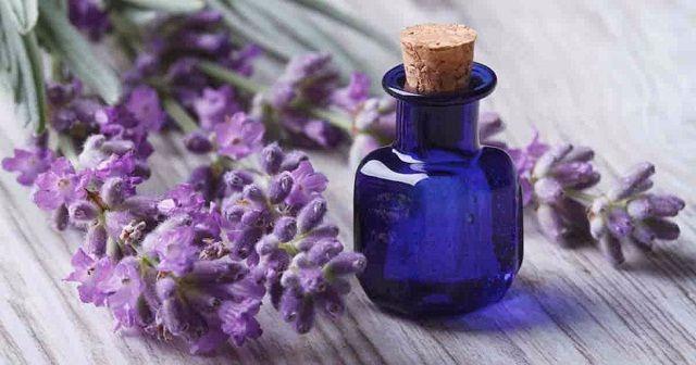 Khử mùi hôi nách bằng tinh dầu Lavender