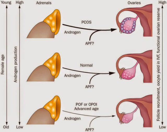 Thay đổi hormone dẫn đến da hỗn hợp thiên dầu