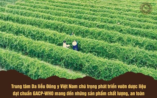 Một trong số những vườn dược liệu của Trung tâm Da liễu Đông y Việt Nam